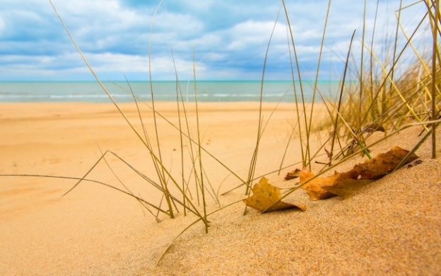 beach-sand-grass-sunshine_tn2