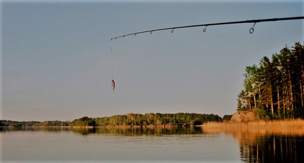 stock_fishing-1024x6561